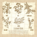 Vintage culinary herbs information poster design