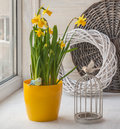 Vintage decoration window with a decorative cage and daffodils Royalty Free Stock Photo
