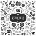 Vintage decorative plants and flowers collection. Hand drawn Royalty Free Stock Photo