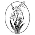 Vintage elegant flowers. Black and white vector illustration. Iris flower. Botany. Royalty Free Stock Photo