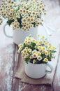 Vintage enamel mugs with chamomile Royalty Free Stock Photo