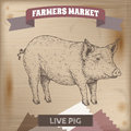 Vintage farmers market label with live pig.