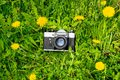 Vintage film camera surrounded by yellow flowers on a green lawn. Blooming dandelions Royalty Free Stock Photo