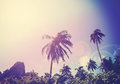 Vintage filtered picture of faded palms with flare effect Royalty Free Stock Photo