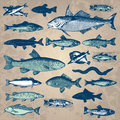Vintage fish set (vector) Royalty Free Stock Photo