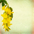 Vintage floral background with yellow acacia flowers on a brown Royalty Free Stock Photo