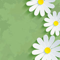 Vintage floral green background with flower chamom Royalty Free Stock Photo