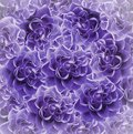 Vintage floral  purple beautiful background.  Flower composition. Bouquet of flowers from  violet roses. Close-up. Royalty Free Stock Photo
