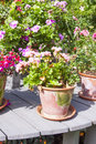Vintage flowerpot with flower Royalty Free Stock Photo