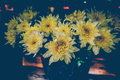 Vintage flowers blooming,yellows flowers Royalty Free Stock Photo
