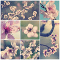Vintage flowers collection pink peach in springtime Stock Images