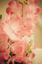 Vintage flowers pink close up Stock Photography