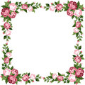 Vintage frame with pink roses rose buds and green leaves on a white background Stock Image