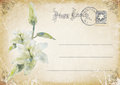 Vintage grunge postcard with flower illustration postage stamp stamp scratches and stains Stock Photos