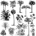 Vintage hand drawn palm trees set 2 Royalty Free Stock Photo