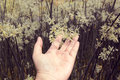 Vintage hand holding are flowers,nature backgrounds Royalty Free Stock Photo