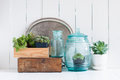 Vintage home decor houseplants green succulents old wooden boxes and blue glass bottles on white wooden board cozy Stock Image