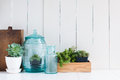 Vintage home decor houseplants green succulents old wooden boxes and blue glass bottles on white wooden board cozy Stock Images