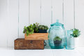 Vintage home decor houseplants green succulents old wooden boxes and blue glass bottles on white wooden board cozy Stock Photography