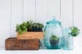Vintage home decor houseplants green succulents old wooden boxes and blue glass bottles on white wooden board cozy Royalty Free Stock Photo