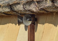 Vintage horn loudspeakers on a wall under a thatched roof speaker Royalty Free Stock Photography