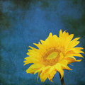 Vintage Image Of Sunflower On ...