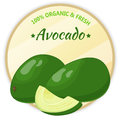 Vintage label with avocado isolated on white background in cartoon style. Vector illustration. Fruit and Vegetables