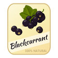 Vintage label with blackcurrant isolated on white background in cartoon style. Vector illustration. Berries Collection.