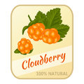 Vintage label with cloudberry isolated on white background in cartoon style. Vector illustration. Berries Collection.