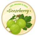 Vintage label with gooseberry isolated on white background in cartoon style. Vector illustration. Fruit and Vegetables Royalty Free Stock Photo