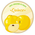 Vintage Label With Quince Isol...