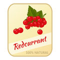 Vintage label with redcurrant isolated on white background in cartoon style. Vector illustration. Berries Collection.