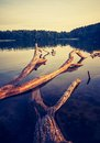 Vintage lake sunset with old dead tree trunk Royalty Free Stock Photo