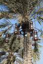 Vintage lanterns in a palm tree Stock Image