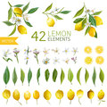 Vintage Lemons, Flowers and Leaves. Lemon Bouquetes Royalty Free Stock Photo