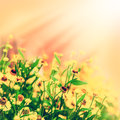 Vintage macro photo of field of yellow flowers defocus blur in sunset Stock Images