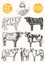 Vintage meat menu scheme beef cuts drawn vector Royalty Free Stock Photo