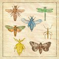 Vintage Moth, Dragonfly, Mantis and Stick Insect Collection on Antique Paper Royalty Free Stock Photo