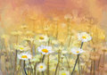 Oil painting daisy-chamomile flowers field at sunrise. Hand painted Vintage flowers white flower daisy at meadow