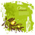 Vintage olive background hand drawn illustration Royalty Free Stock Image