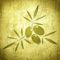 Vintage olives grunge background in green Stock Images