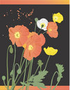 Vintage Orange Poppies Stock Photography