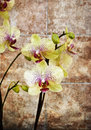 Vintage orchid Stock Photo