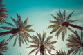 Vintage Palm Tress in Hollywood Royalty Free Stock Photo