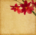 Vintage paper with orchid red Royalty Free Stock Photography