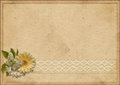 Vintage paperboard background with gerbera and lace flowers the space for text or photo Stock Images