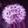 Vintage Pastel Background - vivid abstract dandelion flower Royalty Free Stock Photo