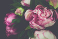Vintage Peony Rose Flower Royalty Free Stock Photo