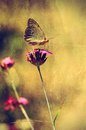 Vintage photo of a butterfly Royalty Free Stock Photo
