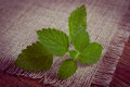 Vintage photo fresh healthy lemon balm on wooden table herbalism green sedative herbs concept for nutrition and Stock Photo